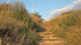 Escaleras en la naturaleza almacen de video