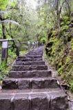 Escaleras en la selva tropical del gran camino Australia del océano Foto de archivo libre de regalías