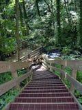 Escaleras en las maderas Imagenes de archivo