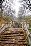 Escaleras en parque fotografía de archivo