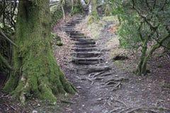 Escaleras espeluznantes Fotos de archivo