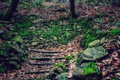 Escaleras a la naturaleza Foto de archivo libre de regalías