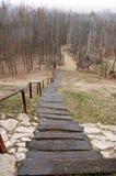 Escaleras largas en bosque Fotos de archivo libres de regalías