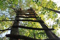 Escaleras a los árboles de abedul en el cielo Imagen de archivo