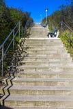 Escaleras - manera a través de la vegetación genérica en Sylt Fotos de archivo