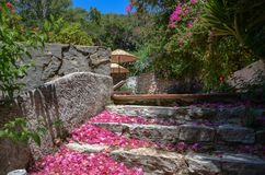 Escaleras pedregosas en el jardín floreciente verde fotos de archivo