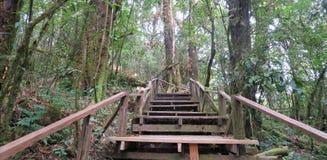 Escaleras que suben a través del bosque Foto de archivo libre de regalías