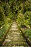 Escaleras que van abajo Imagen de archivo libre de regalías