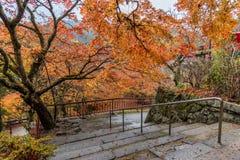 Escaleras que van abajo de la colina en un bosque pacífico en otoño Imagen de archivo