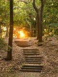 Escaleras a través del bosque fotografía de archivo