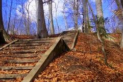 Escaleras viejas en el bosque Fotos de archivo libres de regalías