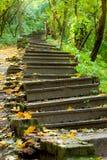 Escaleras viejas en el parque. Enfocado en el centro foto de archivo libre de regalías