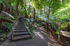 Escaleras y poste indicador de madera en selva tropical del australiano de la selva Fotografía de archivo
