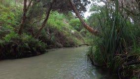 Escaleras y río de la selva almacen de metraje de vídeo