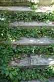 Escaleras y vid Fotografía de archivo libre de regalías