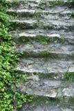 Escaleras y vid Foto de archivo libre de regalías
