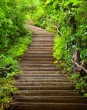 Escalier à la forêt Image libre de droits