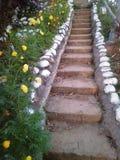 Escalier au sommet Image libre de droits