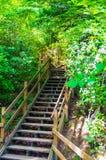 Escalier aux chutes de Whitewater Images stock