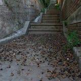 Escalier avec des ordures de feuille Image libre de droits