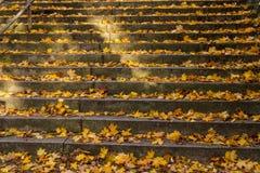 Escalier d'automne Photos stock