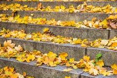 Escalier d'automne Photographie stock