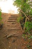 Escalier d'une forêt à une lumière images stock