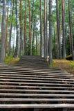 Escalier dans la forêt Image stock