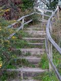 Escalier dans la forêt, Galicie, Espagne image libre de droits