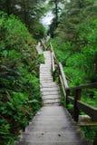 Escalier dans la forêt tropicale Photographie stock