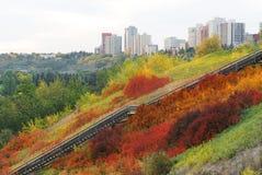 Escalier dans le buisson d'automne Image stock