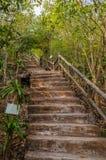 Escalier dans sauvage Image stock