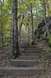 Escalier de forêt Photographie stock
