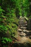 Escalier de nature Photos libres de droits