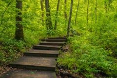 Escalier en bois en grand parc d'état en bois de Nerstrand Minnesota Photographie stock libre de droits