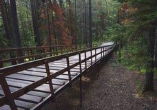 Escalier en bois et long dans la forêt verte Images stock