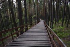 Escalier en bois et long dans la forêt verte Photos libres de droits