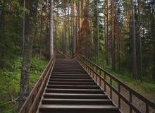Escalier en bois et long dans la forêt verte Photographie stock libre de droits