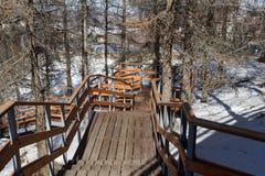 Escalier en bois parmi des arbres photographie stock