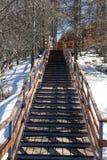 Escalier en bois parmi des arbres photographie stock libre de droits