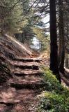 Escalier en nature Image stock
