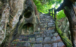 Escalier en pierre étonnant, barrière, arbre Images libres de droits