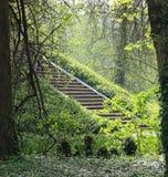 escalier en pierre antique au milieu de la forêt dense Images libres de droits