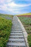 Escalier en pierre avec les fleurs et le ciel bleu Images libres de droits
