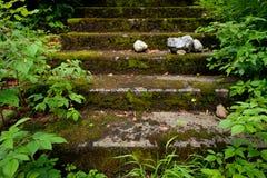 Escalier en pierre envahi avec de la mousse et les plantes vertes Photos stock