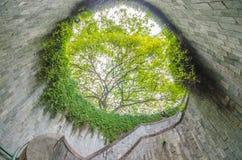 Escalier en spirale du croisement souterrain et l'arbre plus de dans le tunnel au parc de mise en boîte de fort, Singapour photographie stock
