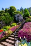 Escalier entouré par de belles fleurs de ressort image libre de droits
