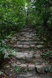 Escalier fait à partir de la roche dans la forêt Photos stock