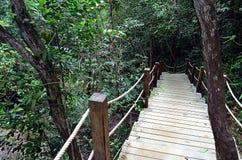 Escalier fait avec des étapes en bois dans la jungle image libre de droits