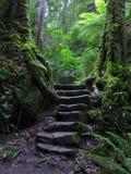 Escalier par la forêt humide Photos stock